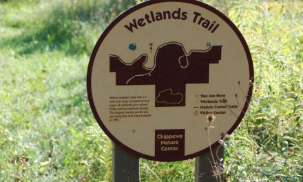 Let's go to the wetlands