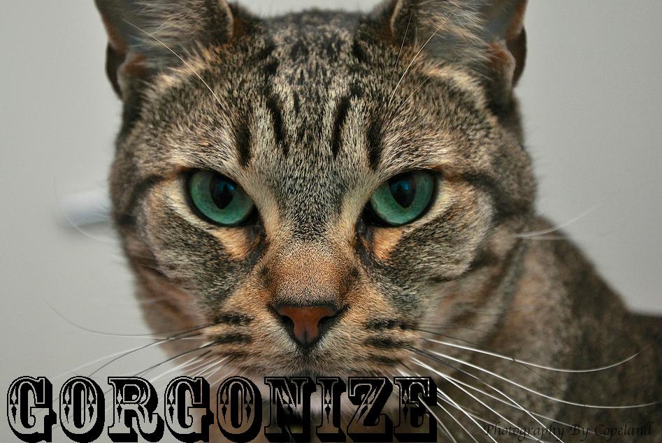 gorgonize