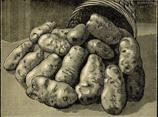 Ways of serving potatoes-27 amazing recipes