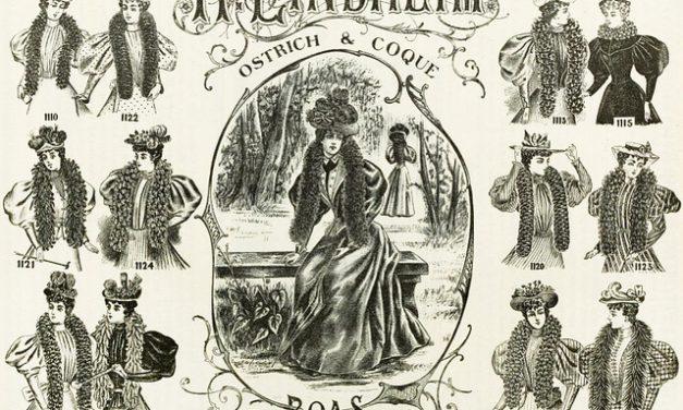 Fashion Boas to remain